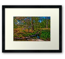 Springtime, Hodges Gardens State Park (HDR) Framed Print