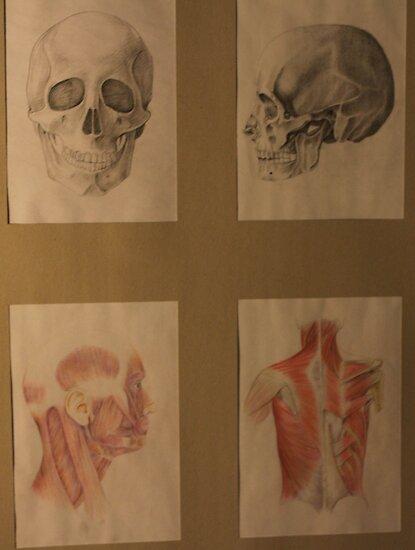human body by vernotitike