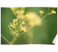 Redcliffe Plantation Flowers Poster