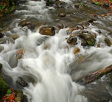 Williams Creek by Lee LaFontaine
