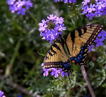 A Butterfly Enjoys Spring Flowers by Terence Russell