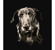 Regal Scottish Deerhound Photographic Print
