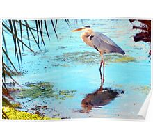 Great blue under palm Poster