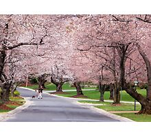 Canopy of Blossoms Photographic Print