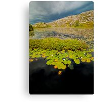Water Lilys In Hebrides Canvas Print