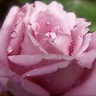 Rain Drops on my Petals. by Gabrielle  Hope
