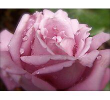 Rain Drops on my Petals. Photographic Print