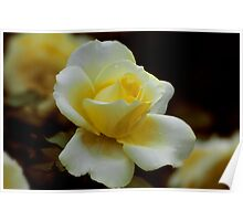 The little scented rose Poster