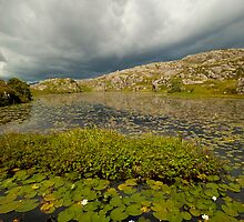 Dark Clouds over Lily Pond by C W MacGregor