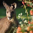 Eastern Grey Kangaroo by UniSoul