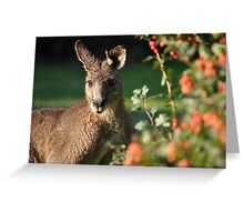 Eastern Grey Kangaroo Greeting Card