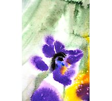 Violet Beauty Photographic Print