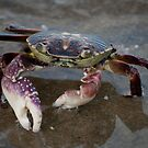 Big Crab - Mooloolaba Beach by Helen Barnett
