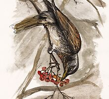 the hungry thrush by tarantella