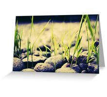 Rice seedlings growing on the gravel Greeting Card