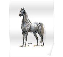 white arabian horse portrait Poster