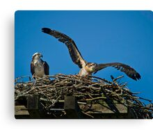 Learning to Fly Canvas Print
