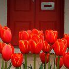 Tulips at My Door by Leonie Mac Lean
