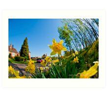 spring daffodils 2 Art Print
