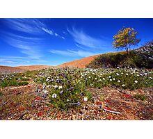 Wave Rock Wildflowers - Hyden  WA Photographic Print