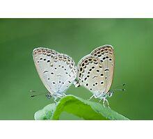 butterflies Photographic Print