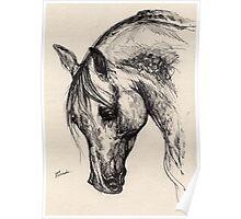 Ostragon, polish arabian horse Poster