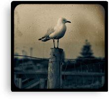 Seagull - Vintage lens Canvas Print