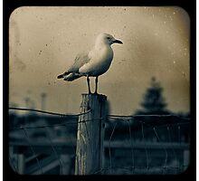 Seagull - Vintage lens Photographic Print