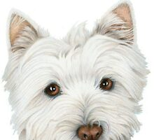 Westie Dog Birthday Card by ckeenart