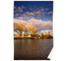 Golden Hour Willows Poster