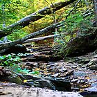 Ricketts Glen Path by tmbolle
