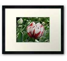 tulip army girl:) Framed Print