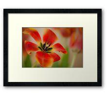 Sweet colours of Spring Framed Print
