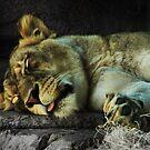 Cat Nap by Jamie Lee