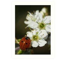 Ladybird On Wild Horthorn Art Print