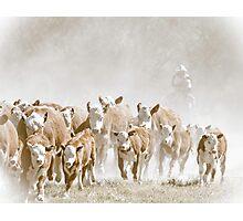 Bringin' in the Herd Photographic Print