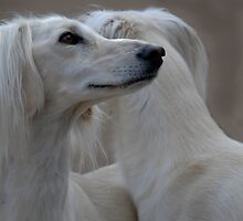 Two heads of a Saluki by sandyprints
