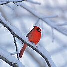 Snow Again by eleanor p.  labrozzi