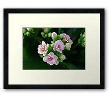 Natural bouquet Framed Print