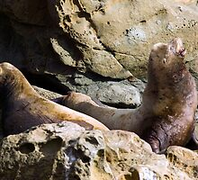 Sea Lions by Randall Ingalls
