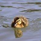 Little Duckling by Samantha Higgs