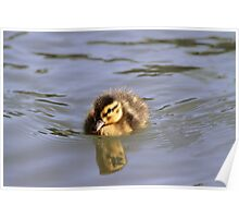 Little Duckling Poster