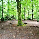 Leigh woods by Susie Hawkins