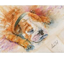 Sleep Enzo Photographic Print