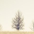 Three Silhouetted Trees in the Fog by Rebecca  Haegele