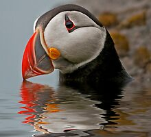 Puffin by toivido