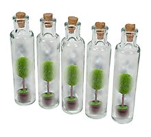 Nature Preserve Jars Photographic Print