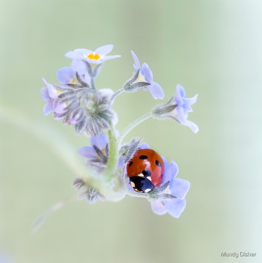 Her petal bed by Mandy Disher