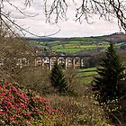 Calstock Viaduct from Cotehele by moor2sea