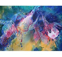 Watercolour: Rainbow of Fuchsias Photographic Print